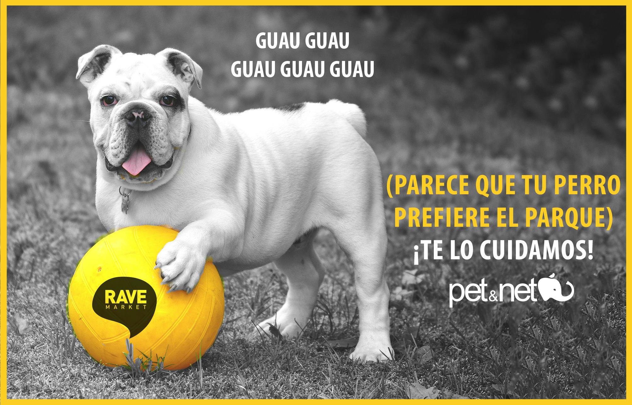 Pet&net cuida de tu perro en RAVE MARKET